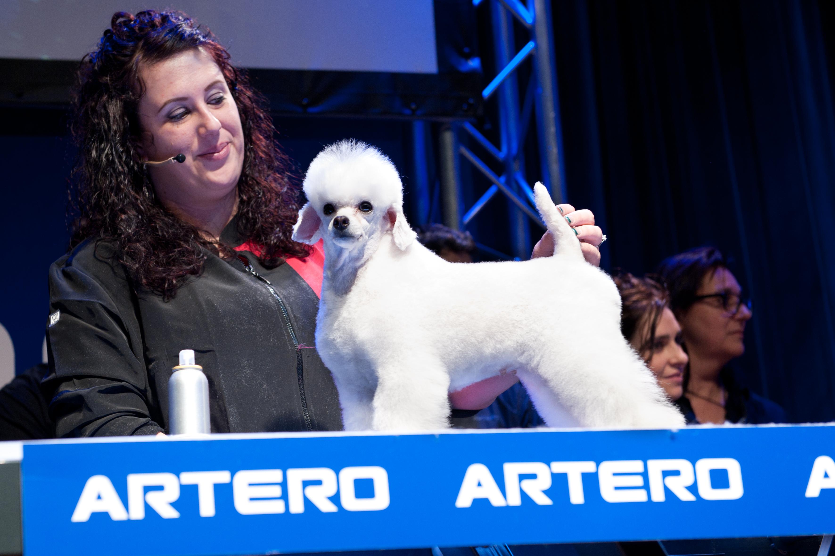 Caniche Toy Artero, peluqueria canina
